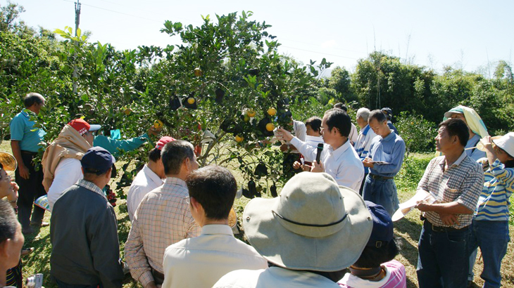 """Organic Navel Orange Cultivation—Two-Phase Fruit Covering Demonstration Event""at Huagu Organic Farm in Donghe Township (Nov. 29, 2011)"
