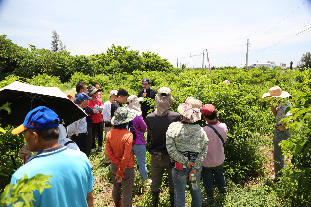 """Eco-friendly Sugar Apple Cultivation Demonstration Event"" Held on June 27, 2019, at the Banchiu Branch Station"