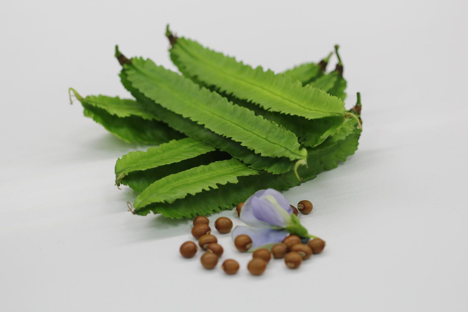 翼豆臺東1號嫩莢翠綠,莢形優良且口感鮮脆
