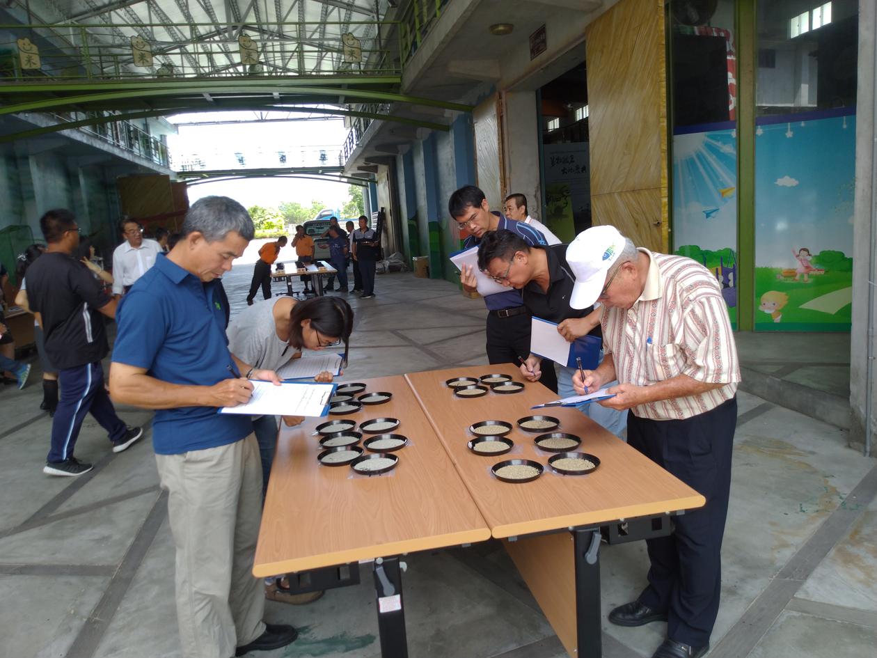評審委員針對稻米外觀進行評分